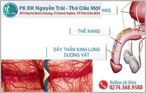 Phương pháp chặn dây thần kinh lưng dương vật